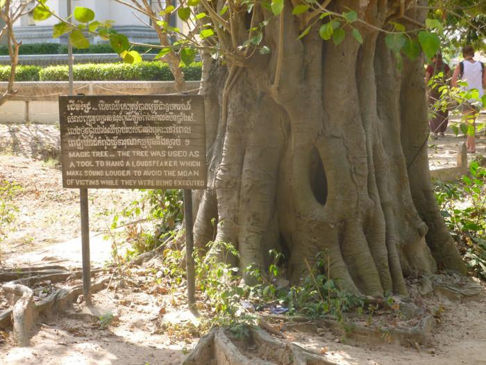 10magictree-700x525.jpg